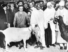 Gandhi and goat (Source: Unknown)